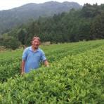 岐阜のお茶旅 vol.5_東白川村 五加(ごか)地区の無農薬の茶畑で・・・・。