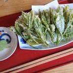 清水加奈『かぶせ茶農家のひとりごと』vol.20 『新茶 2018』