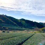 元祖国産燻製茶カネロク松本園3代目奮闘記 vol.28 インフルにまけんなヨ!