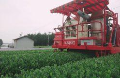 清水加奈『かぶせ茶農家のひとりごと』vol.32『新茶2019 刈りとり中です!!』