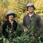 岐阜のお茶旅 vol.29_自然栽培から生まれる白川薪火三年番茶 和ごころ農園