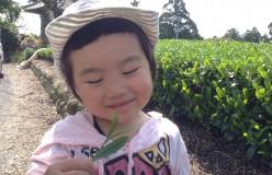 元祖国産燻製茶カネロク松本園3代目奮闘記 vol.4 日本茶を世界に!和紅茶編