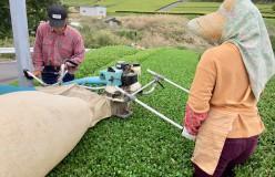 元祖国産燻製茶カネロク松本園3代目奮闘記 vol.8 「2017新茶」