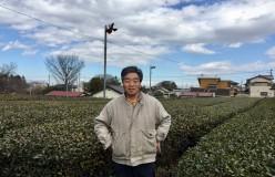 【終了】7月11日(火)所沢和田園茶摘みの会~旧茶工場見学も~