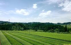 元祖国産燻製茶カネロク松本園3代目奮闘記 vol.10 いよいよはしるよ観光列車