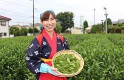 狭山茶楽々なお話vol.16 「狭山茶畑でお茶娘体験」