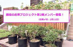 銀座のお茶プロジェクト第2期メンバー募集!(募集終了)