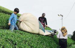 元祖国産燻製茶カネロク松本園3代目奮闘記 vol.32 令和もカネロク松本園を宜しくお願いいたします。